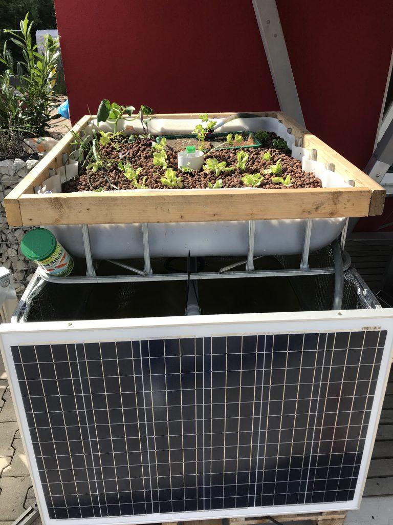 Aquaponik System mit Solar auf dem Firmengelände iKratos